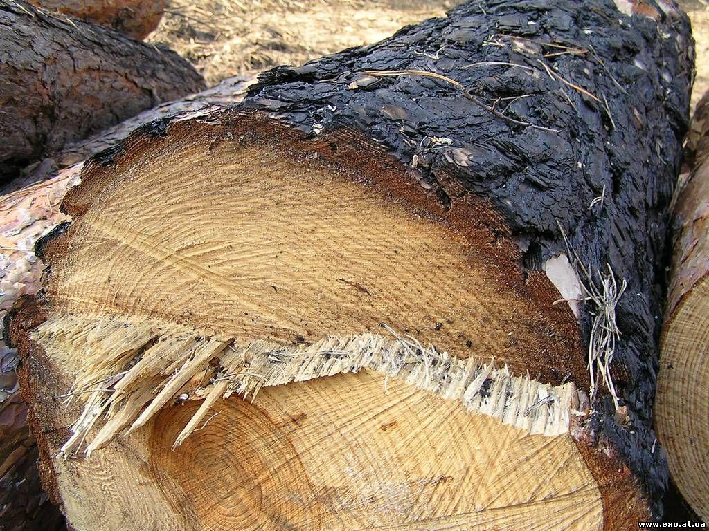 На Тячевщині майстер лісу попався на незаконній вирубці дерев