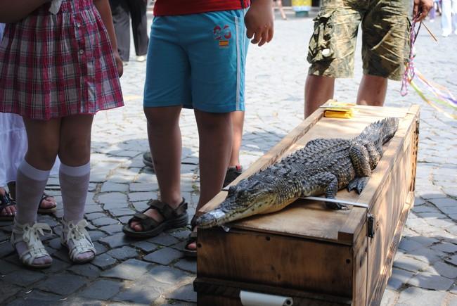 У Мукачеві знайшли крокодила (ФОТО)