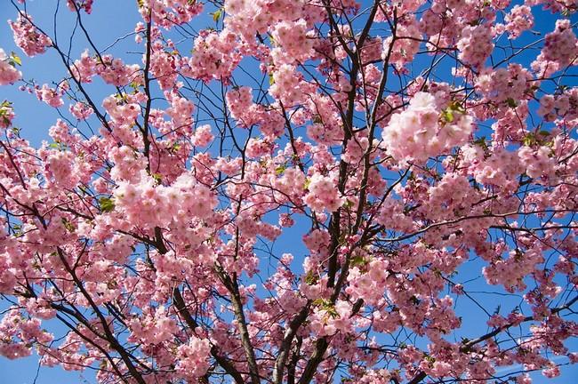 В Ужгороді заборонили саджати дерева