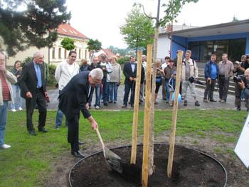 Мер Мукачева посадив липу в Чехії