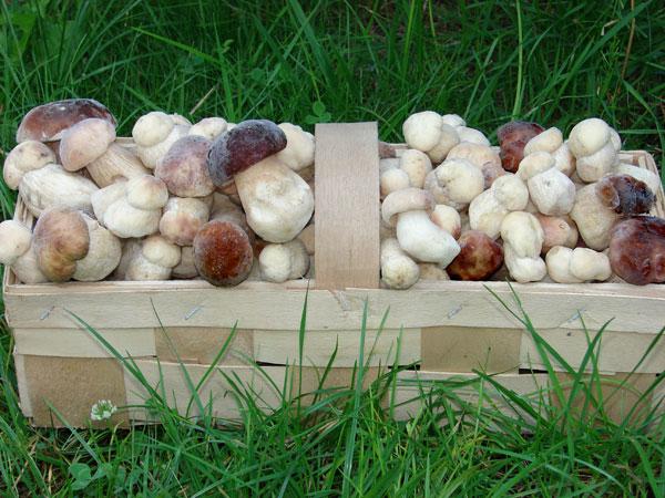 Закарпатку згвалтували під час збирання грибів