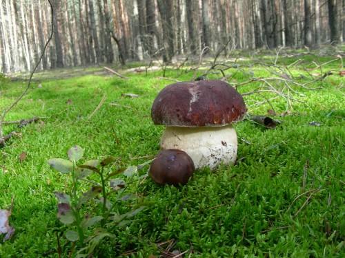 Закарпатець пішов по гриби зі штик-ножем