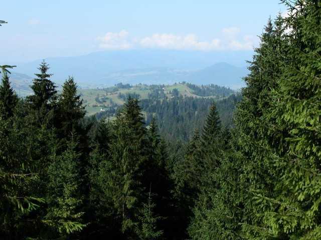 Хустський майстер лісу попався на хабарі