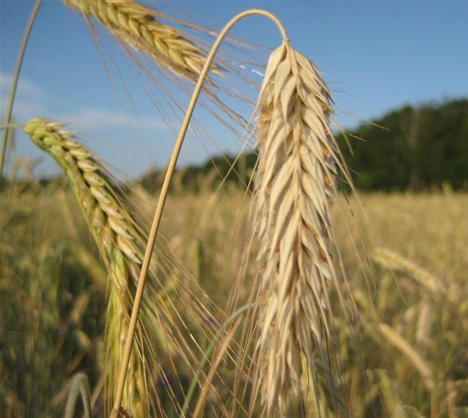 В аграрному секторі збільшились обсяги виконуваних робіт