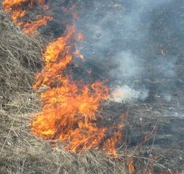 В Мукачеві горіла суха трава