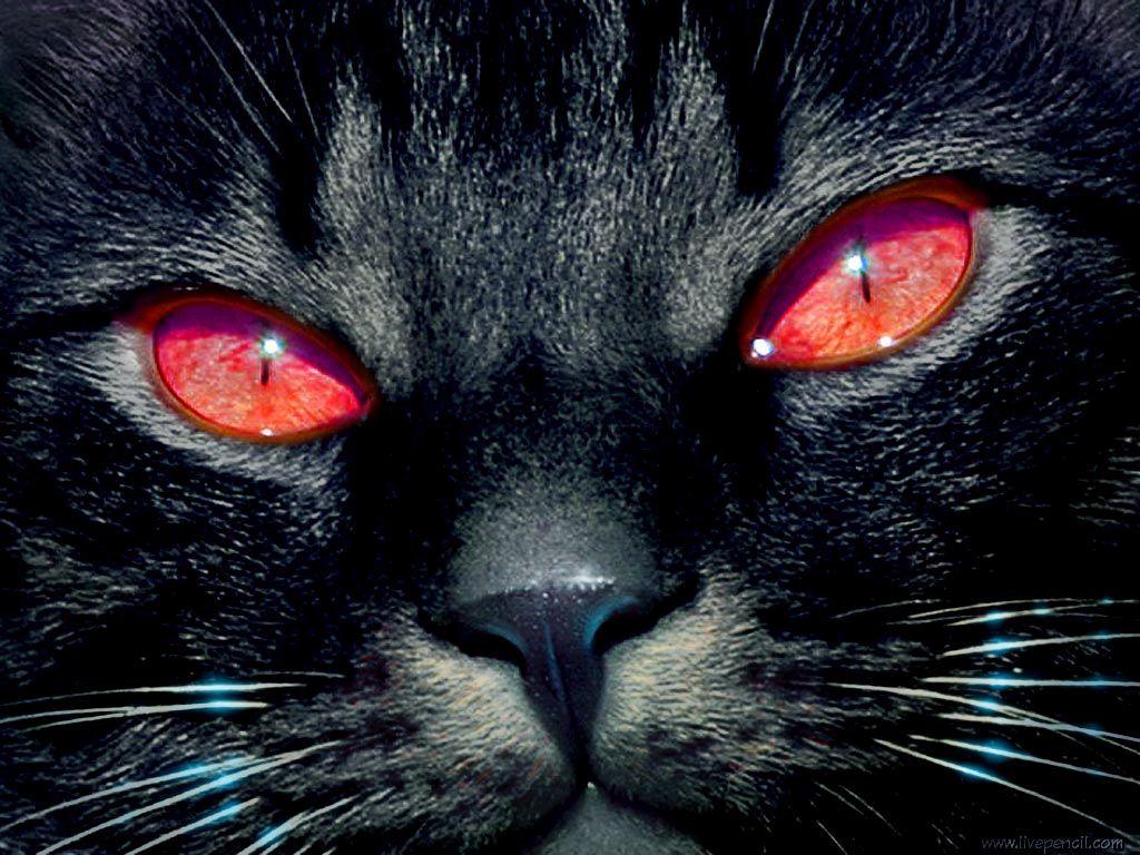 В Ужгороді автівки зіштовхнулись через чорного кота