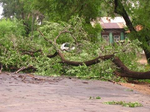 На проїжджу частину автошляху Перечин-Свалява впало дерево