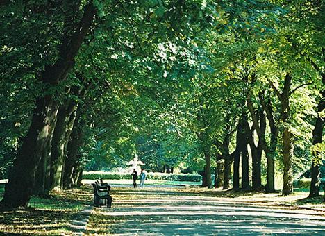 Львівські парки прибирають двірники з Європи та Азії