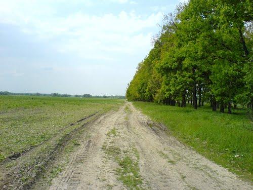 На Херсонщині у лісосмузі знайшли тіло відомого фермера