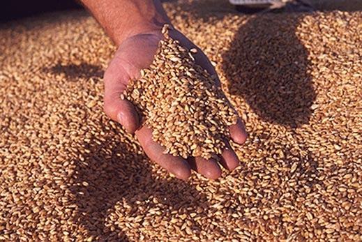 Не зважаючи на несприятливу погоду закарпатські аграрії зібрали непоганий врожай