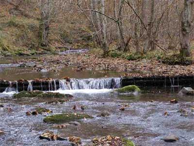 Через забруднення річки загинули тисячі закарпатських риб