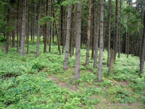 На Хустщині судитимуть майстра лісу
