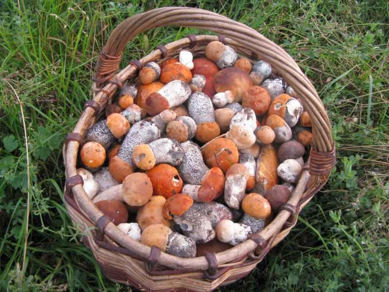 За останній тиждень на Житомирщині зникло п'ятеро грибників