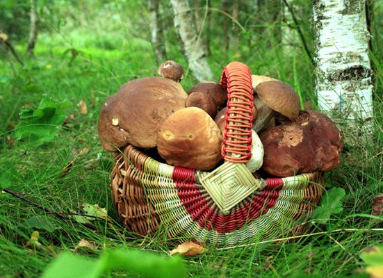 На Ужгородщині розшукують шестидесятирічного грибника