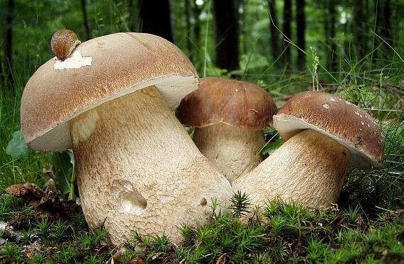 На Закарпатті хочуть встановити пам'ятник грибу