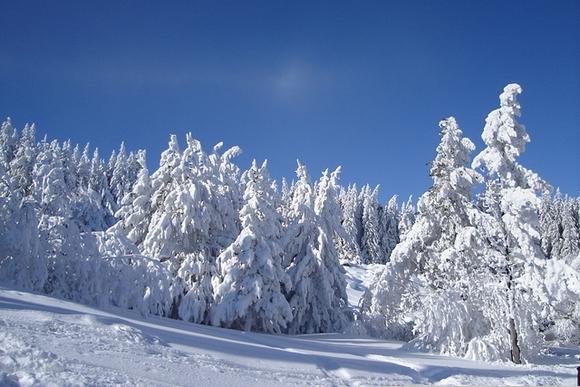 Зима в Україну прийде вже 11 листопада