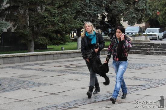 Під міську раду Ужгорода знесли мертвих собак (ФОТО)