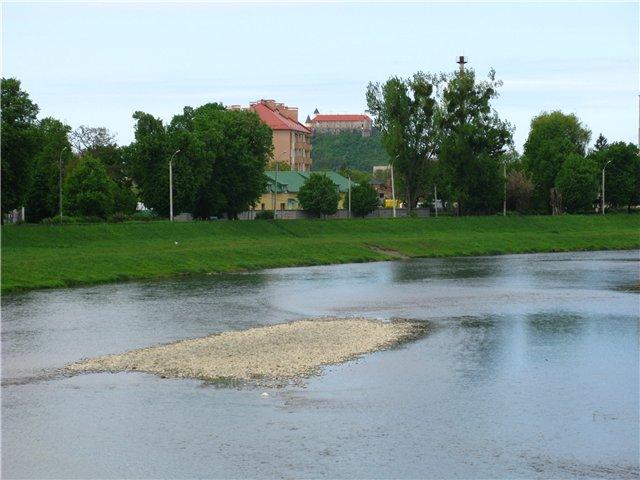 У Латорицю випустили лосося Дунайського