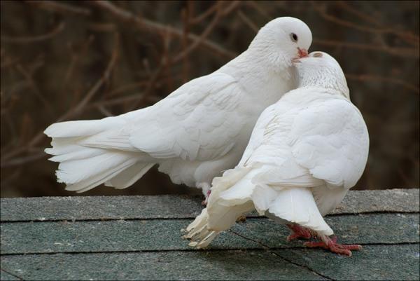 У Колочаві існує унікальний і єдиний в області птахопарк (ВІДЕО)