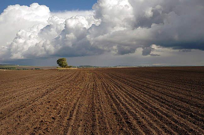 На розвиток агропромисловості Закарпаття виділили півтора мільйони гривень