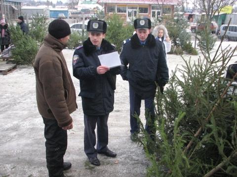 Закарпатська міліція буде боротись проти незаконної вирубки ялинок