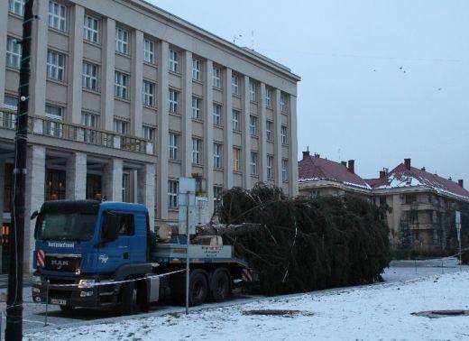 Шлях головної ялинки області від місця зрізу до Ужгороду (ВІДЕО)