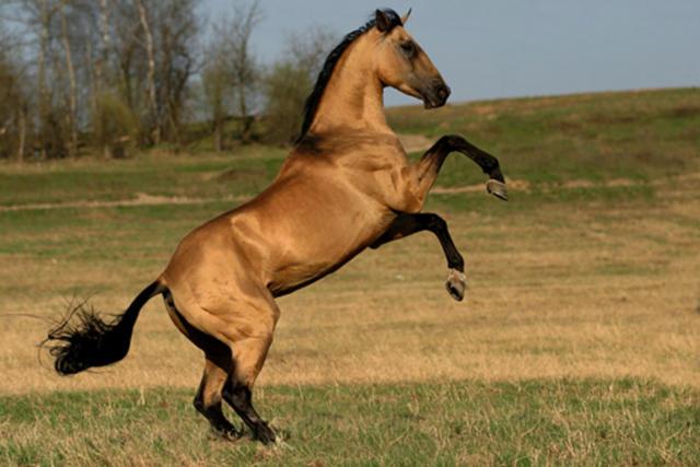 Біля Великого Березного потяг збив коня