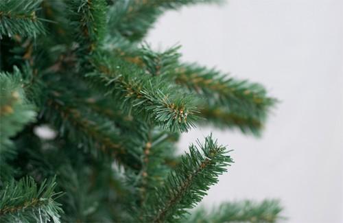 Священники Закарпаття закликають не рубати дерева для новорічних свят