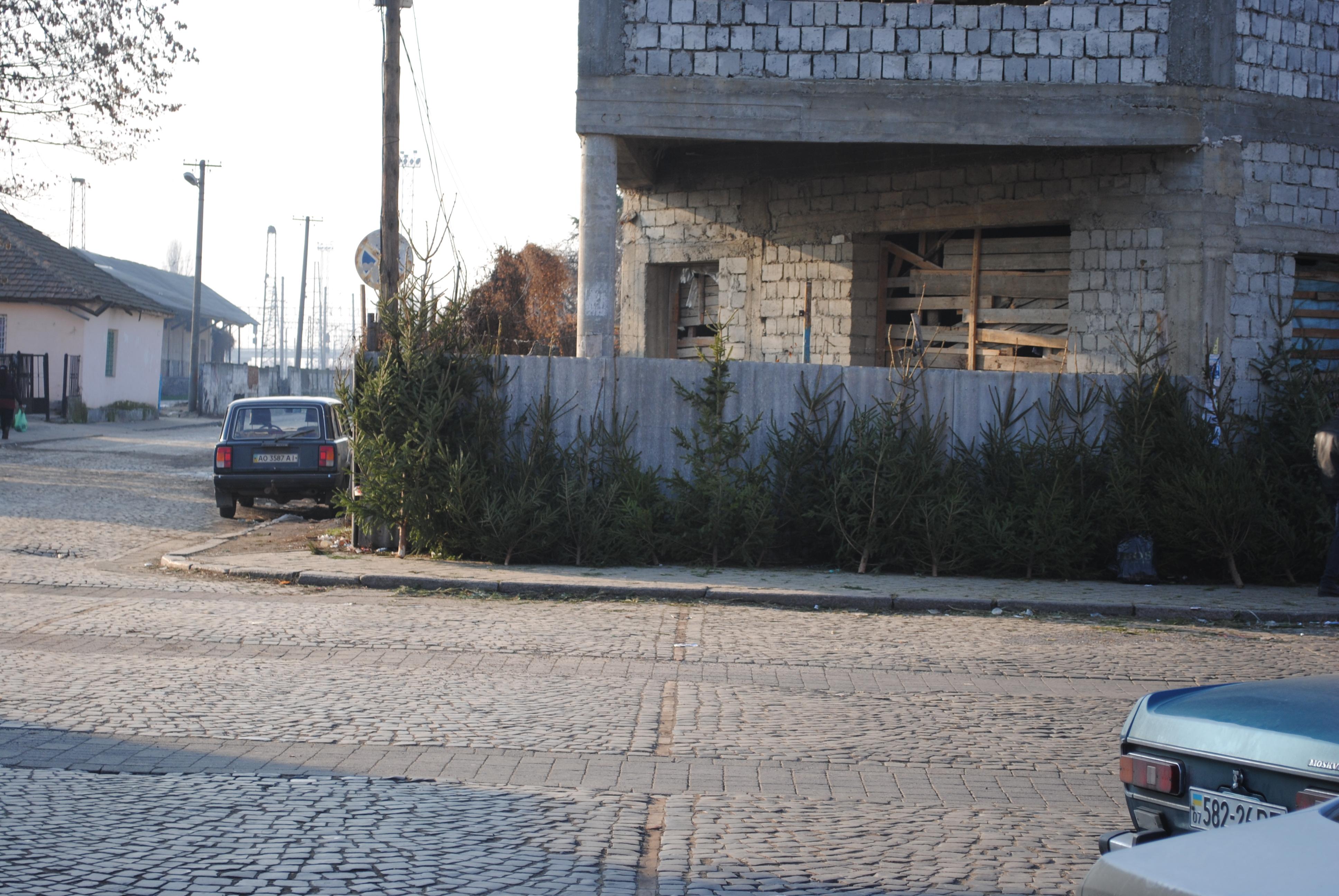 У Мукачеві досі повноцінно працюють стихійні ринки з продажу ялинки (ФОТО)