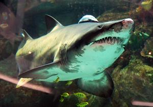 У Ocean Plaza заявляють, що акула в їхньому торговому центрі ще жива