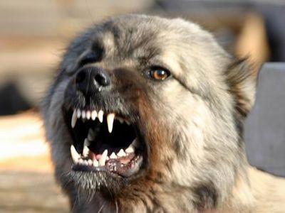 На трьох мукачівських школярів у Підгорянах напала собака