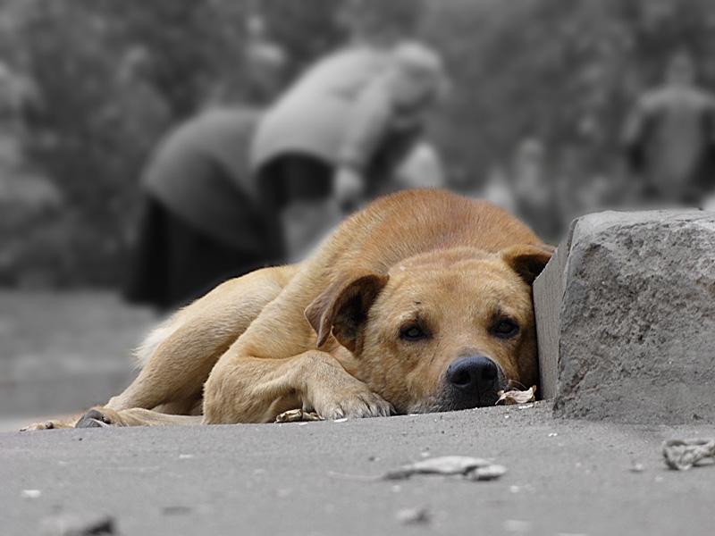 У Хусті планують очистити вулиці від безпритульних тварин (ВІДЕО)