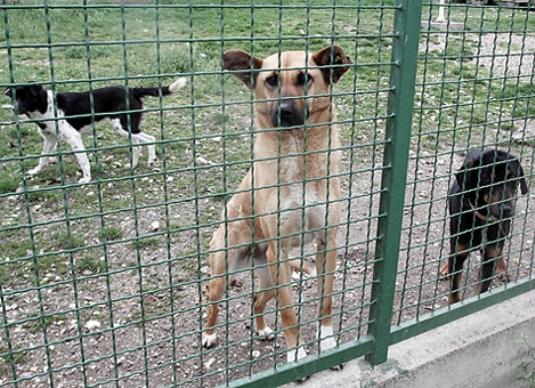 В обласному центрі до кінця року планують побудувати притулок для собак (ВІДЕО)