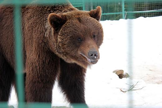 Царство клишоногих: губернатор Закарпаття з міністром екології навідались до реабілітаційного центру для бурих ведмедів (ФОТО)