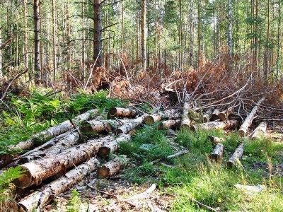 У «Великобичківському лісомисливському господарстві» виявлено порушень на суму понад 3,5 млн грн.