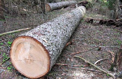 У Великобичківському лісомисливському господарстві виявлено порушень на суму понад 3,5 мільйонів гривень