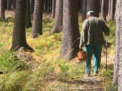 Мукачівський пенсіонер пішов по гриби і не повернувся
