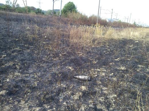 У Чинадієві посеред згорілого поля знайшли бойовий снаряд (ФОТО)