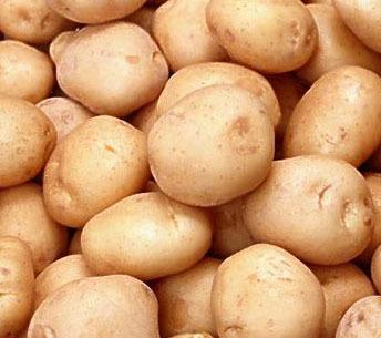 Як прогодувати Закарпаття картоплею знають у дослідній станції Карпатського регіону