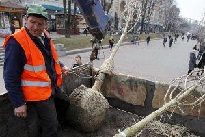 В Ужгроді практично всі молоді дерева загинули (ВІДЕО)