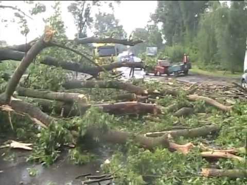 На Великоберезнянщині впавше дерево перекрило проїзд по дорозі