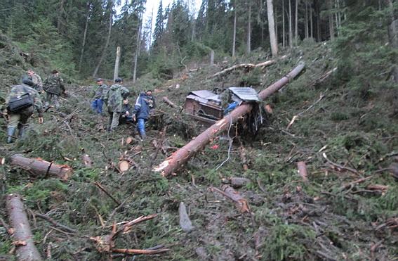 З'явилось фото з місця трагедії, в якій дерево вбило 49-річного працівника лісового господарства (ФОТО)