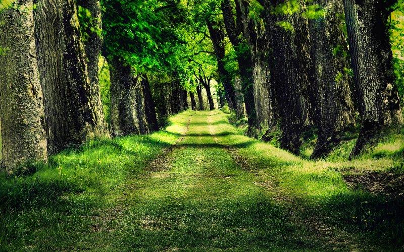 Відтепер Берегівський і Мукачівський райони сполучає ще одна дорога – лісова