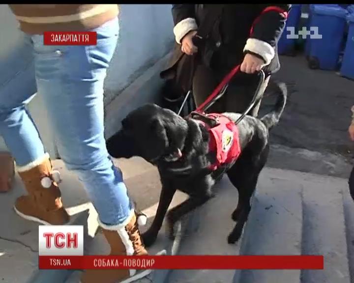 Перший в Україні центр для підготовки собак-поводирів відкриють в Ужгороді (ВІДЕО)
