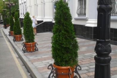 Ужгородські міліціонери затримали жінку, яка викрала молоді деревцята декоративної туї