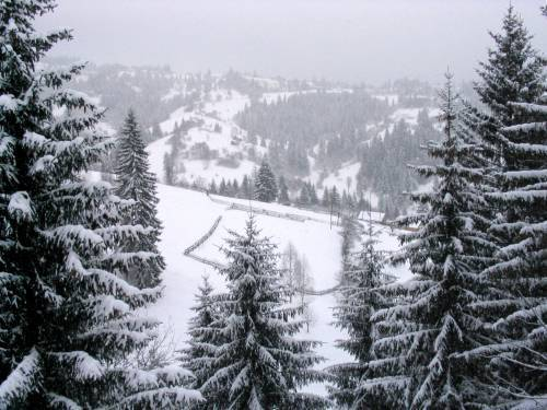 Найближчими днями побачити сніг можна буде хіба що на високогір'ї Закарпаття