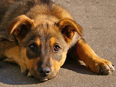 У Мукачеві в мікрорайоні Черьомушки невідомі потруїли собак (ВІДЕО)