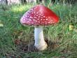 В області зафіксовано 17 випадків отруєння грибами