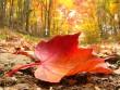 Міська влада Мукачева просить людей прибрати сміття та опале листя