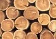 Закарпатський ліс збагатив місцеву казну